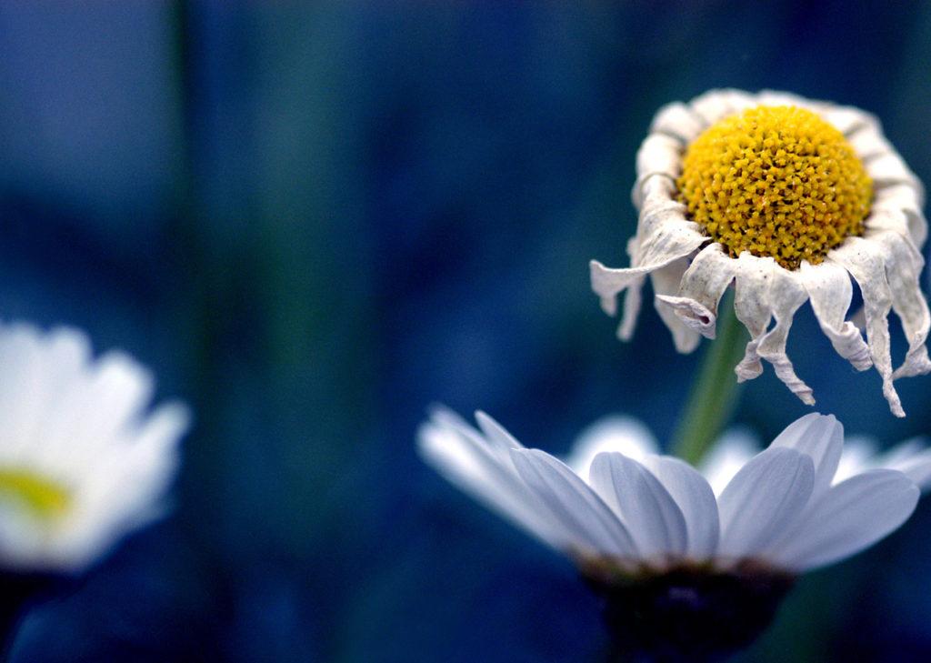 potential fulfillment inner truth wisdom authenticity