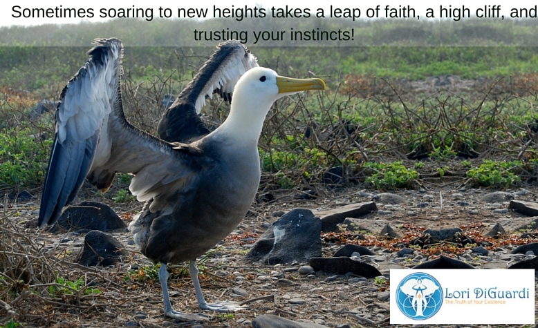 Sometimes soaring to new heights takes a leap of faith, a high cliff, and trusting your instincts